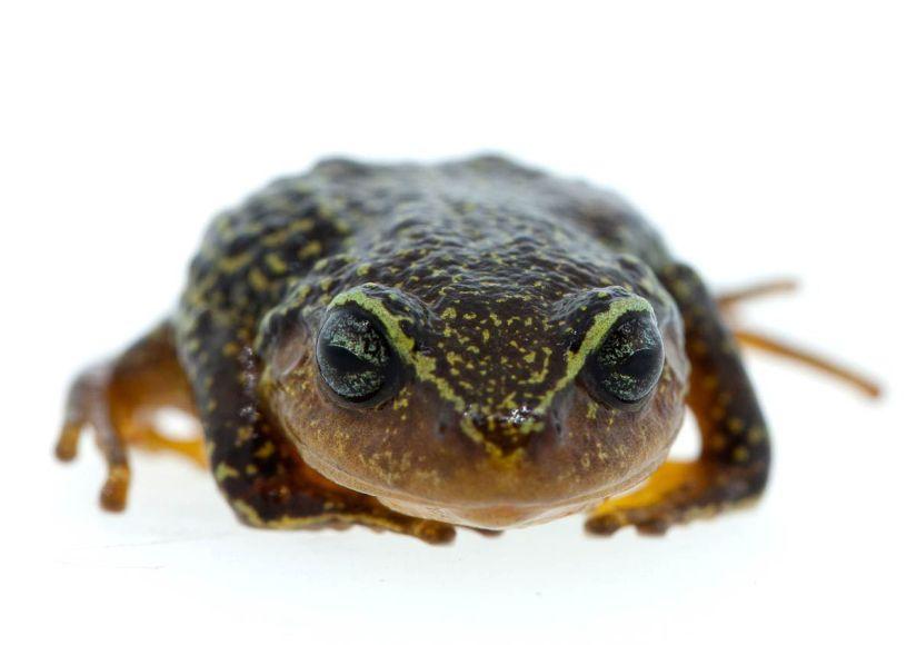 frog_Colombia.jpg