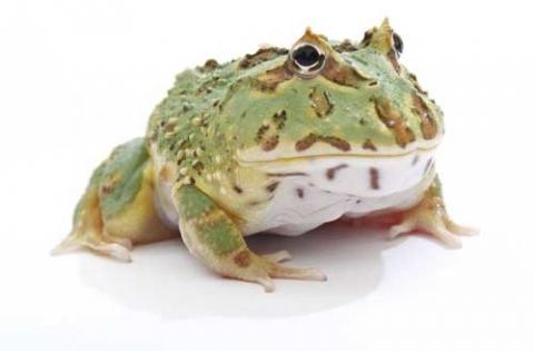 pacmanfrog500-09fd4477